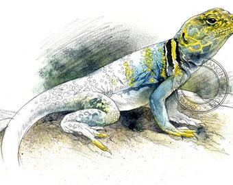 Collared Lizard watercolour - wildlife art - nature print of original artwork