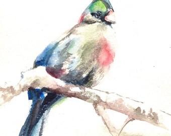 Bird Painting, Original Watercolor Painting, Turaco Bird Watercolour Art