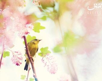 Yellow Bird - Photo Print, bird photography, spring, botanical art print, Orange-crowned Warbler
