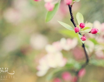 New Beginnings - Photo Print, flower bud photography, spring, botanical, pink green