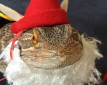 Garden Gnome Costume for Bearded Dragons! One size fits most.