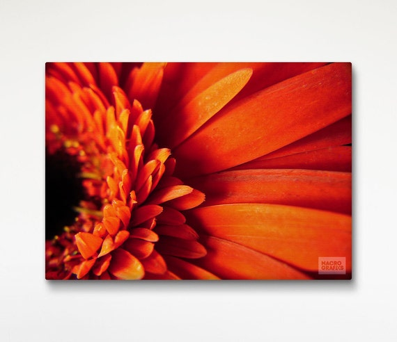 Daisy Print Canvas, Floral Decoration, Macro Photography, Red Floral Wall Art, Floral Canvas Decor