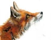 Fox print . Animal watercolor Illustration. Red and Orange.