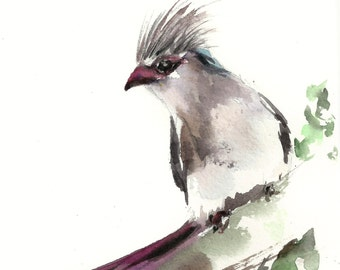 Blue Naped Mousebird Bird Painting, Watercolor Painting Art Print, Bird Art, Watercolour Art