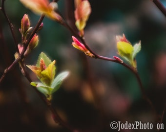 Instant Digital Download Fine Art Nature Photography 'Buds' Printable
