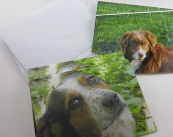 Blank Note Cards, Note Cards, Photo Note Cards, Set of 4 - Greeting Cards, Dog Note Cards