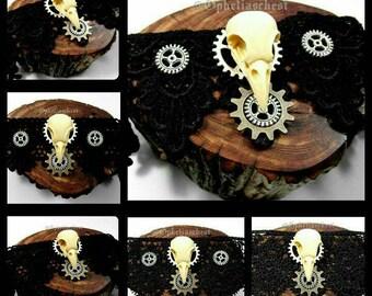 Steampunk Bird Skull Choker, Steampunk Bird Skull Necklace, Skull Choker, Resin Bird Skull, Lace Gothic, Taxidermy Jewelry, Handmade Jewelry