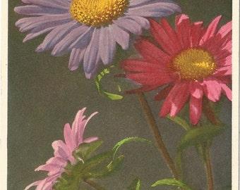 Vintage Unused Botanical Postcard, ca. 1940, China Aster by  Thor E. Gyger, Switzerland  #185