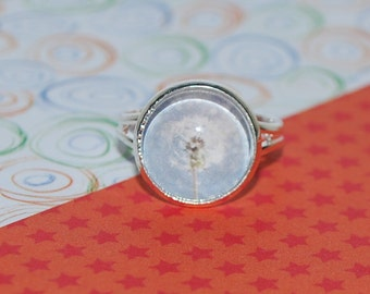 Ring adjustable white dandelion on a light blue background