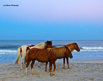 Beach Ponies at Sunset.