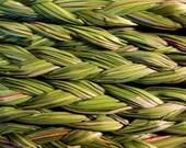 Sweet Grass Seeds, Hierochloe odorata, Sacred Ceremonial Braided Grass, Basket Weaving, Native and Shamanic Plant, Medicinal Herb