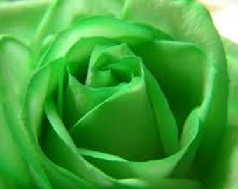 Green Rose Seeds, Rose Bush Plant, Perennial Flower
