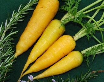 Solar Yellow Carrot - 300 seeds (Organic/non-GMO)