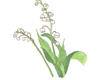 Lily of the Valley (8x10)