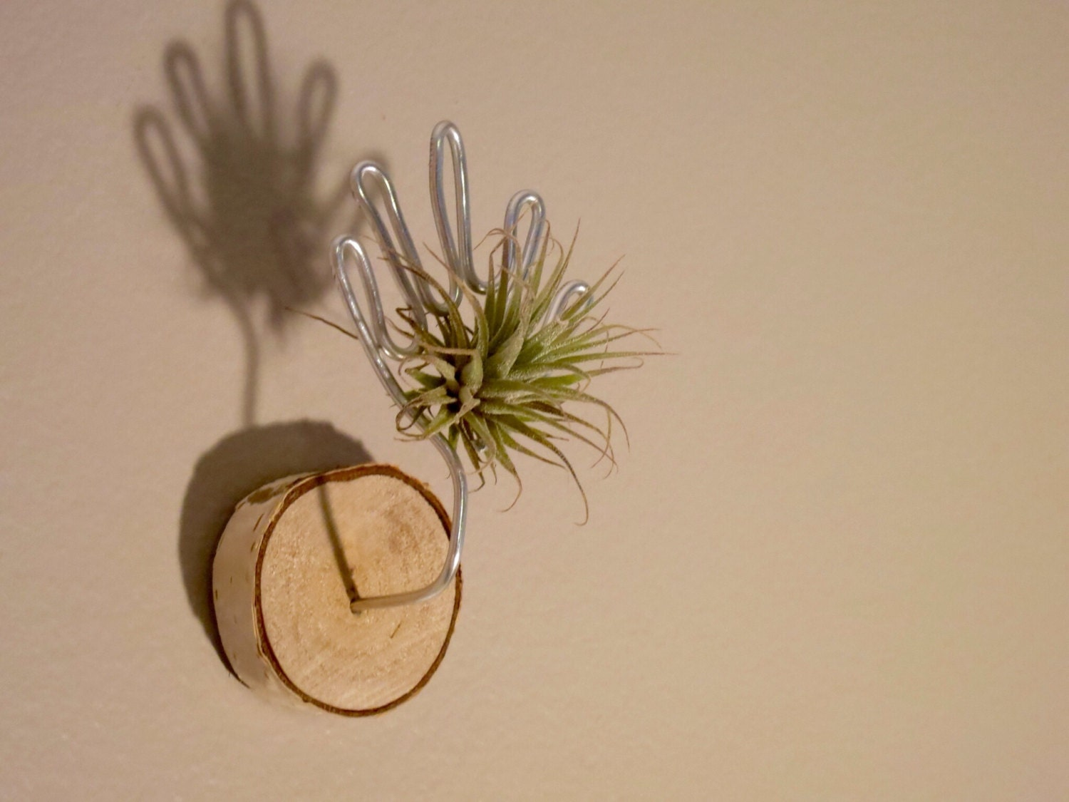 Mini air plant magnet or wall art no 1 by hauteverdure on etsy for Air plant wall art