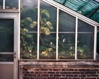 Greenhouse (photographic)