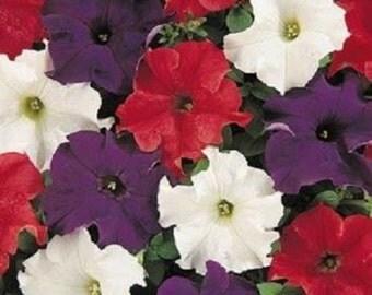 CELEBRITY Desert Sky Mix   Petunias at City Floral 2016 ...