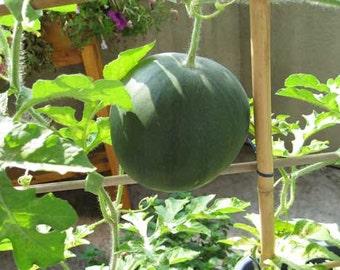 100 Sugar baby Watermelon Seeds