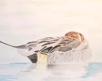 Bird illustration, Duck illustration, bird art, watercolor painting, bird painting, watercolor animals, illustration, watercolor of a duck