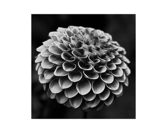 Photography | Black and White | Flower | Photograph | Wall Art | Print