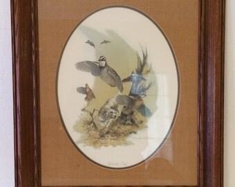 Vintage Douglas Van Howd Framed Print, Bobwhite Quail Framed Print