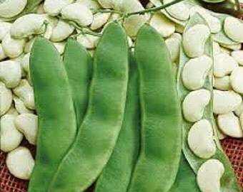 Organic Heirloom White Dixie Butter Pea Lima Bean vegetable seeds Bush type plant grows 16-24 inches high delicious small Lima beans 2016