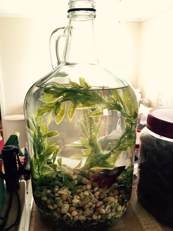 Upcycled jug beta fish centerpiece for Beta fish centerpiece