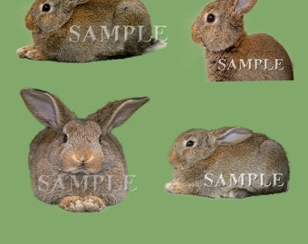 Bunnies PNG file overlay