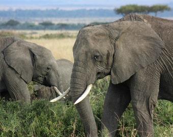 Elephant From Kenya Africa Photograph