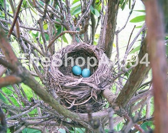 "Robin's Nest Photo - Robin's Eggs Photo - Bird Eggs in Nest Photo - Instant Download - ""New Life"""
