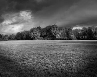 black and white fine art photography landscape photograph woodland trees fine art print trees wall art woodland home decor nature forest