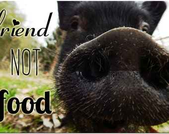 Friend Not Food - Vegetarian Vegan Pig Nose Photo Fridge Magnet