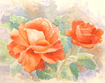 Watercolour painting of peach roses