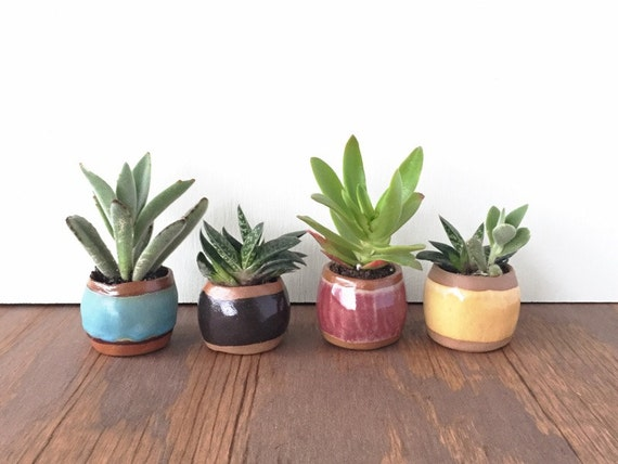 petit cactus pot. Black Bedroom Furniture Sets. Home Design Ideas