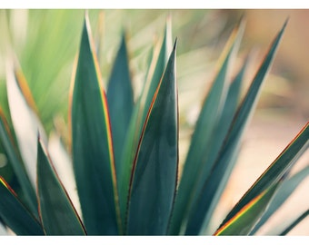 Agave Print - Nature Photograph - Succulent Photograph - Flower Photo - Spine 6 - Fine Art Photograph - Alicia Bock - Green Art - Floral Art
