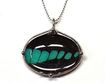 Oval Graphium Butterfly Necklace - Real Butterfly Wing Jewlery - Teal Blue and Black Bluebottle Butterfly