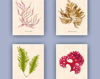 Seaweed art, Sea fan art, Nautical wall art, Pressed seaweed Art, original seaweed reproductions pressings, Botanicals, 11x14 Coastal living