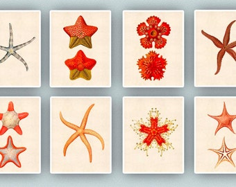 Starfish Collection, Star fish art, Seastar art, nautical art, coastal decor,  Nautical art, Starfish nursery decor, sea life beach