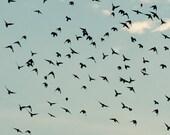 Bird Photography, Fine Art Print, Abstract Art, Birds, Flying, Teal, Sky, Bird Art, Nature Art, Audubon, Autumn, Pale Blue, 4x6 Print