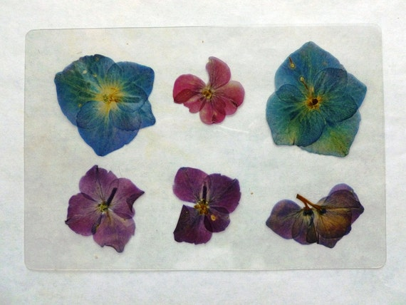 Laminated Pressed Flowers ~ Pressed laminated dried flowers sheets diy embellishments