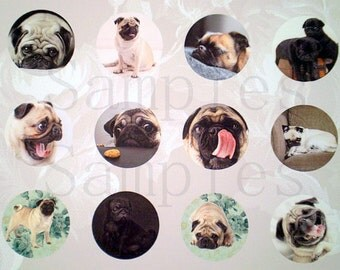 """1"""" Inch Pug Flatback Buttons, Pins or Magnets 12 Ct. CS1"""