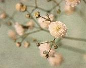 Baby's Breath Macro Print,  White Flower Photo Art Print, Shabby Chic Home, Pink, White, Mint