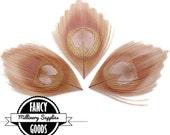 3 - Dusty Pink - Rose -  Peacock Feather - Eyes - Scallop Cut  - Leaves - Millinery -Fascinators