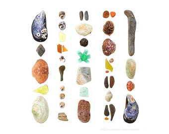 Beachcombing series (No.83) - 8 x 8 photograph - beach stones, seashells, crabs, seaglass