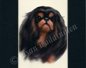 matted 5x7 English Toy Spaniel dog print