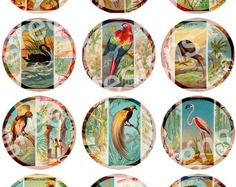 12 Images Exotic and Tropical Birds Cigarette Cards 2.5 Circle Paper crafts Scrapbook Instant Digital Download Printable
