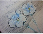 BLUE FLAX - Linum usitatissimum - home grown seeds in hand illustrated envelopes - Seed Packet Gift idea