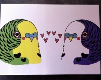Love Budgies card
