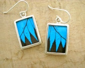 Real Butterfly Wing Earrings - Rare Wing Shape Papilio Ulyses  - Blue and Black - wild science stunner fashion - women - friend - love
