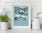 British Coast Marine Life - decorative screen print